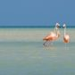 The 10 Best Instagram Locations in Isla Holbox